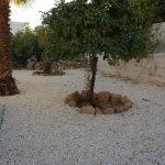 3 Bedroom Villa Paphos to rent